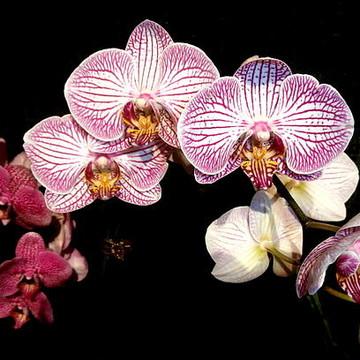 Rhode Island Flower Show Collection