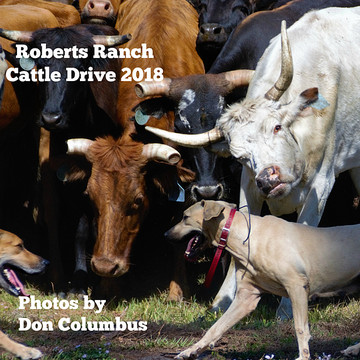 Roberts Ranch Cattle Drive 2018 Collection