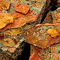 Rock Abstracts Collection