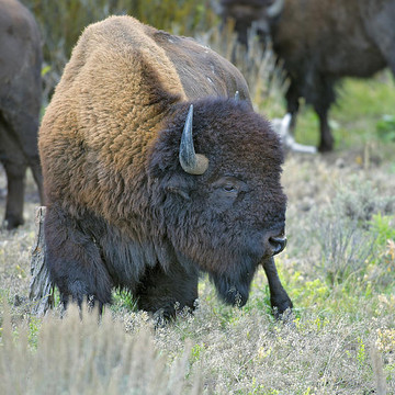Rocky Mountain Wildlife Collection