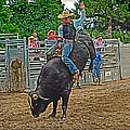 Rodeo Bull Riding Collection