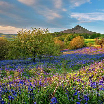Roseberry Topping Collection