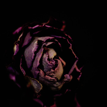 Roses are Dead Collection