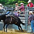Saddle Bronc Riding Collection