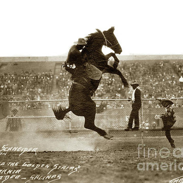 Salinas California Rodeo Collection