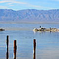 Salton Sea Collection