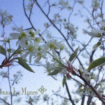 Saskatoon Blooms Collection