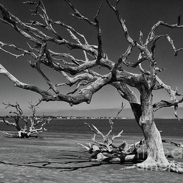 Savannah Tybee Island and Jekyll Island Collection
