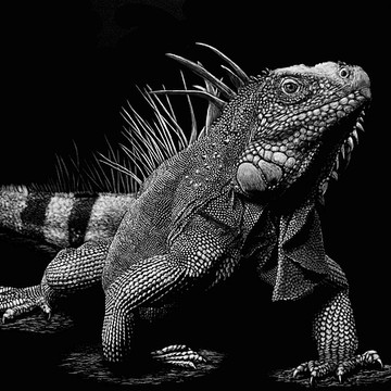 Scratchboard Reptiles Amphibians Fish Insects and Spiders Collection