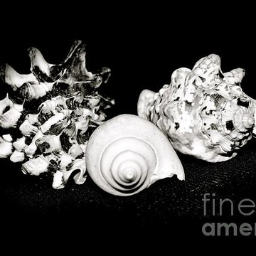 Sea Shells and Ocean Collection