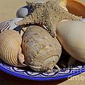 Sea Treasures Collection