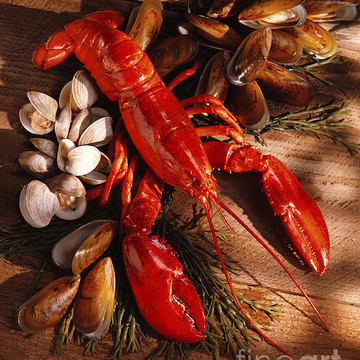 Seafood Collection