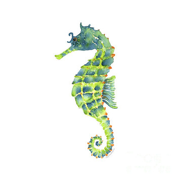 Seahorses Collection