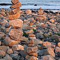 Seaside Closeup Favorites Collection