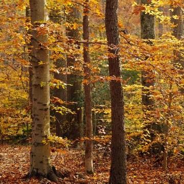 Season - Autumn Collection