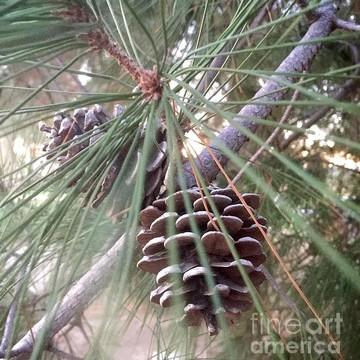 Seasonal Photographs Collection
