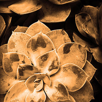 Sepia Images Collection
