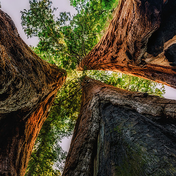 Sequoia and Kings Canyon National Parks Collection