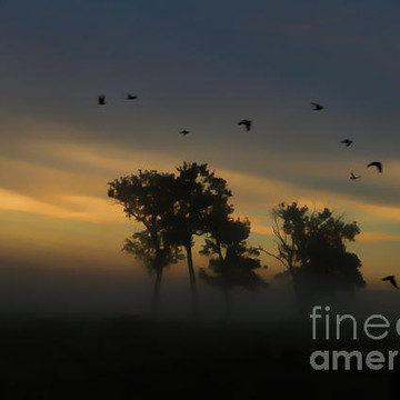 Series - Misty Morning over Rural Farm Land Collection