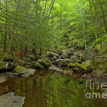 Seven Tubs Natural Area  Luzerne County Pennsylvania Collection