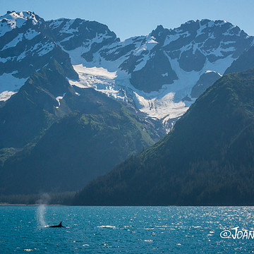 Seward Alaska Collection