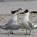 Shorebirds and Seabirds Collection
