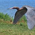 Shorebirds and Wading Birds Collection