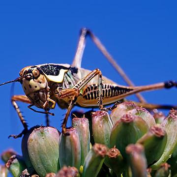 Small creatures photos Collection