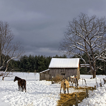Snow Scenes Collection