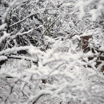 Snow Season Collection