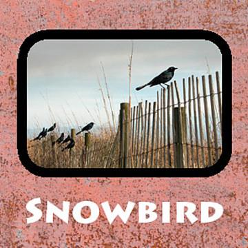Snowbird - Going South Collection