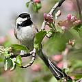 Songbird Photography Collection