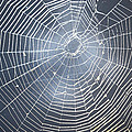 Spider Webs Collection