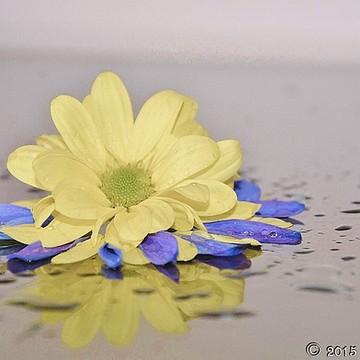 Splash Flowers Collection