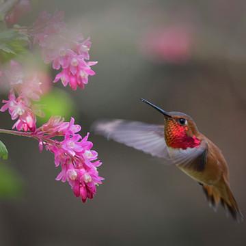 Spring Has Sprung Collection