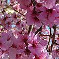 Springtime Collection