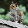 Squirrels Collection