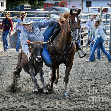 Steer Wrestling Collection