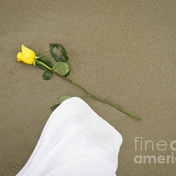 Still Life Collection