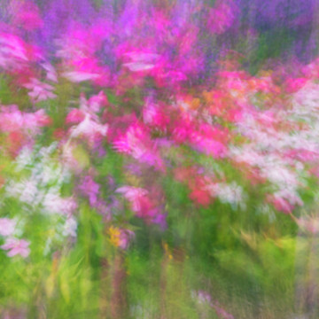 Summer Impression Series Panorama - Flowers Collection