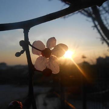 Sun Sets & Rises  Collection