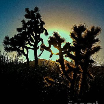 Sunrise in the High Desert California.. Collection