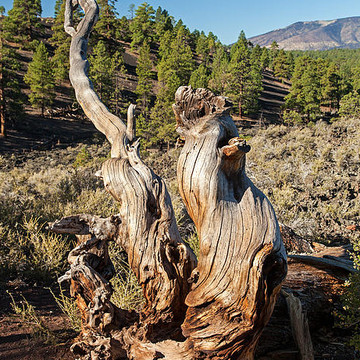 Sunset Crater Volcano National Monument Collection