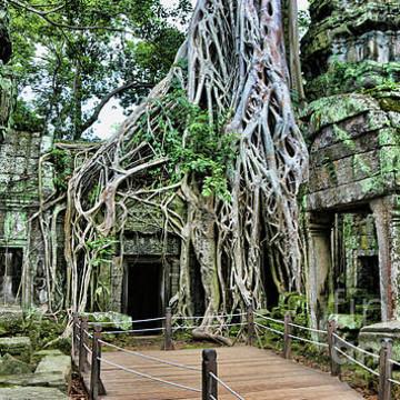 Ta Prohm Temple - Cambodia Collection