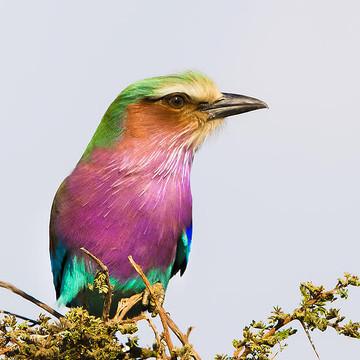 Tanzania - Africa Collection