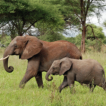 Tarangire National Park Collection