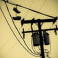 Telephone Poles and Power Lines Collection