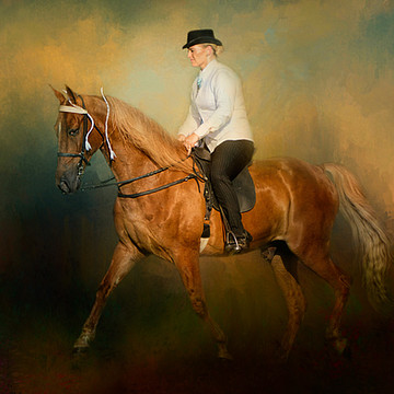 Tennessee Walking Horses Collection