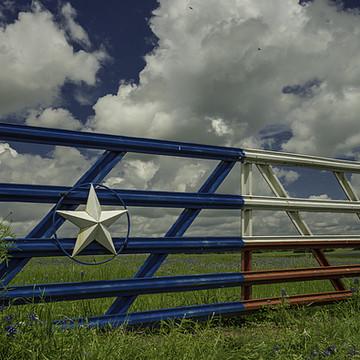Texas Bluebonnets Collection
