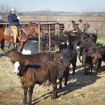Texas Bonds Ranch Collection